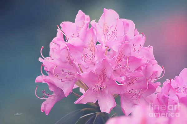 Photograph - Soft Pink by Jutta Maria Pusl