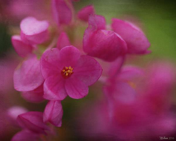 Photograph - Soft Pink by Teresa Wilson