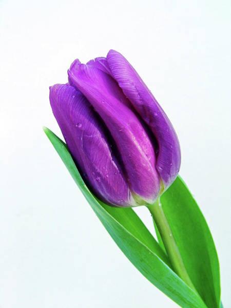 Photograph - Soft Purple by Ree Reid