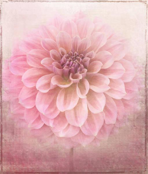 Wall Art - Digital Art - Soft Raspberry by Margaret Hormann Bfa