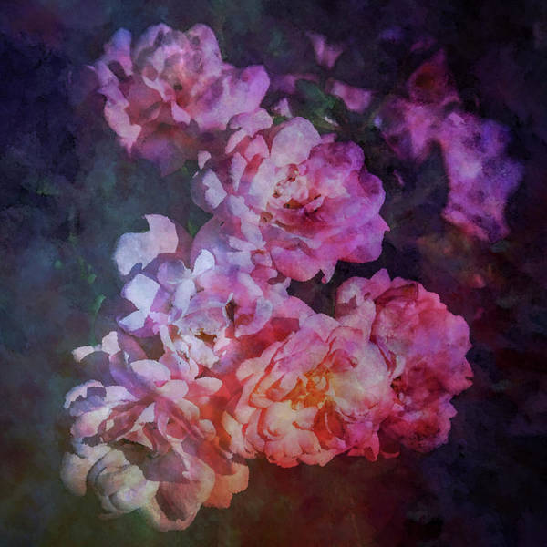 Photograph - Soft Rose Impression 4413 Idp_2 by Steven Ward