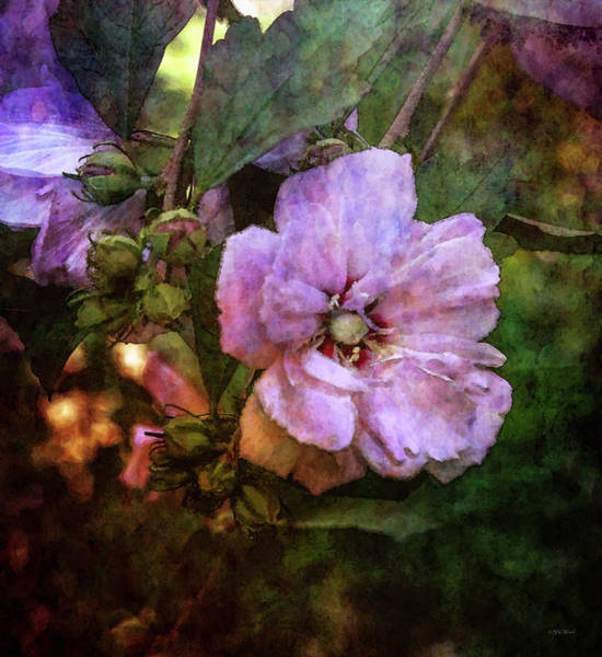Photograph - Soft Rose Of Sharon 3399 Idp_2 by Steven Ward