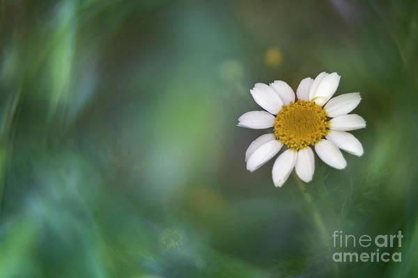 Arte Photograph - Soft Spring IIi by Hernan Bua