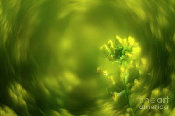 Arte Photograph - Soft Spring Iv by Hernan Bua