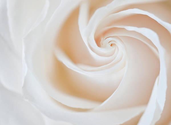 Wedding Bouquet Photograph - Soft Swirls by Susan Candelario