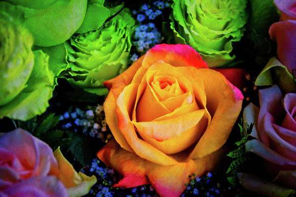 Orange Rose Photograph - Soft Textured Rose by Garry Gay