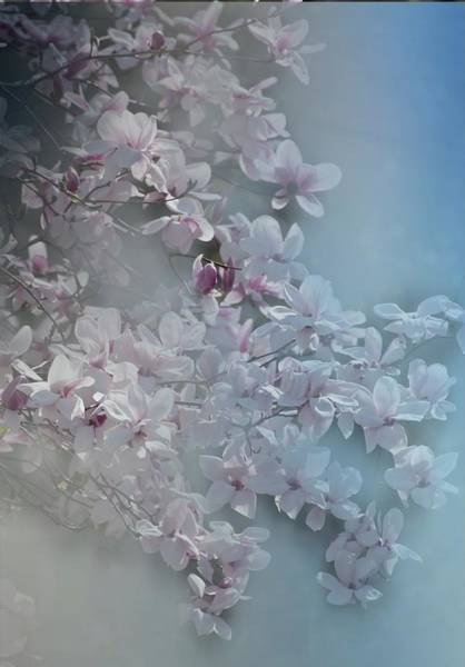 Digital Art - Soft Tulip Tree Blossums by Rusty R Smith