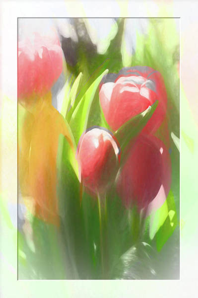 Photograph - Soft Tulips by Natalie Rotman Cote