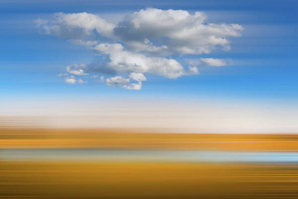 Photograph - Soft White Clouds Over The Cypress Grove Dreamscape by Debra and Dave Vanderlaan