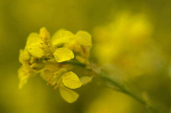 Vegetal Photograph - Soft Wild by Hernan Bua