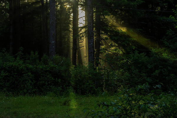 Photograph - Softlight Dreams by Bill Posner