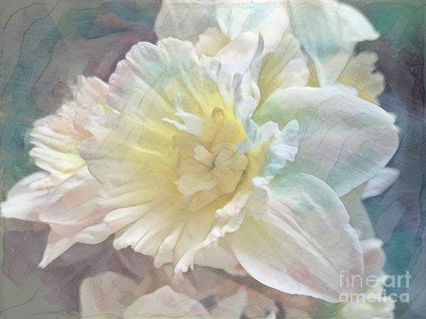 Photograph - Softly Stands My Daffodil by Luther Fine Art