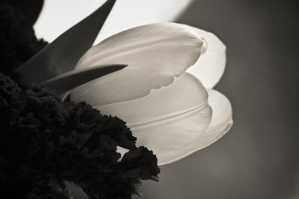 Lit Tulip Art Print