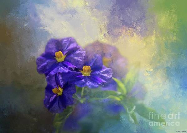Solanum Art Print
