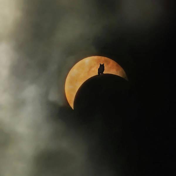Wall Art - Photograph - Solar Eclipse 2017 by Carrie Ann Grippo-Pike