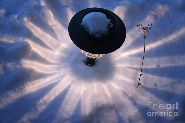 Photograph - Solar Snow Flower by Karen Adams