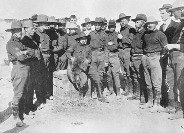 Wall Art - Painting - Soldiers- Gathered Around A Wombat At Brighton Camp, World War One 1914 by Celestial Images