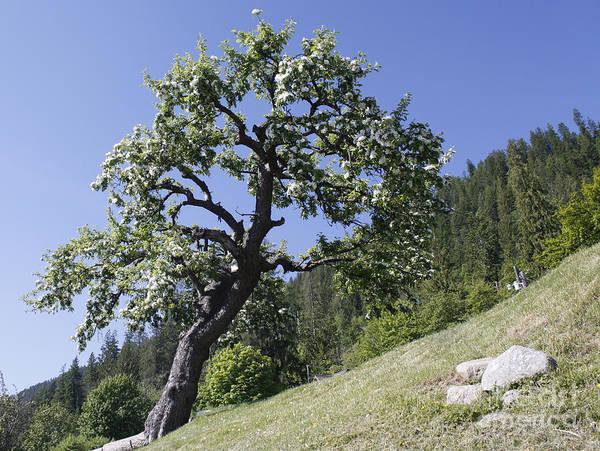 Photograph - Solid As A Tree by Wilko Van de Kamp