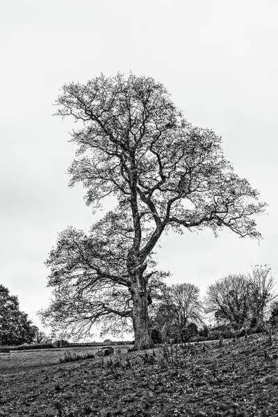 Photograph - Solitary Autumn Tree Hdr by Jacek Wojnarowski