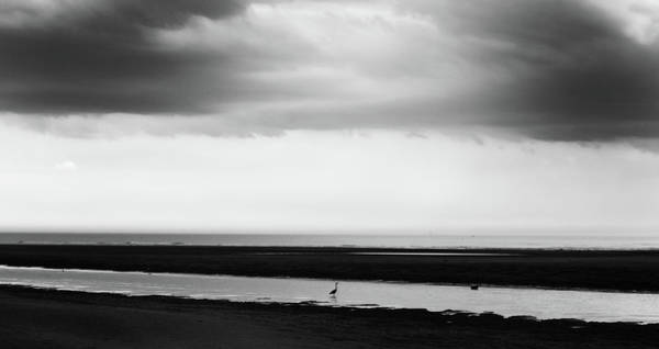 Northumbria Photograph - Solitary Bird  by Philip Openshaw