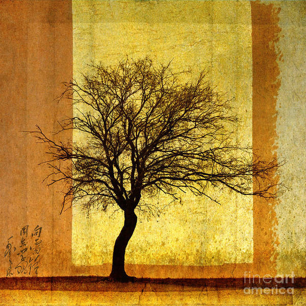 Wall Art - Photograph - Solitary by Elena Nosyreva