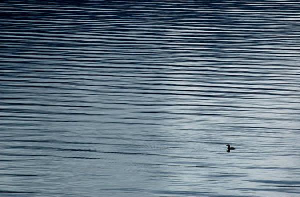 Photograph - Solitary Loon On Kootenay Lake, British Columbia. by Rob Huntley