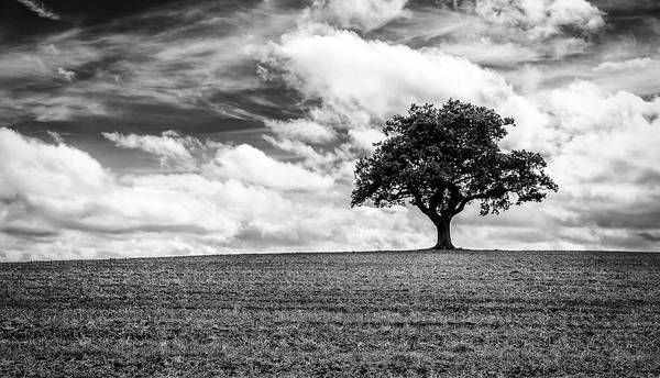 Photograph - Majestic Oak by Nick Bywater
