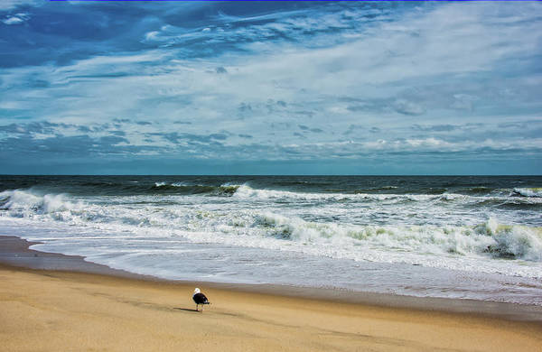 Photograph - Solitary Seagull At Sandy Hook Surf by Gary Slawsky