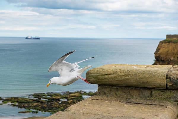 Sea Wall Art - Photograph - Solitary Seagull Take-off by Iordanis Pallikaras