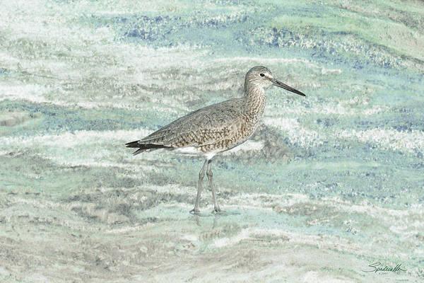 Wall Art - Digital Art - Solitary Shorebird by M Spadecaller