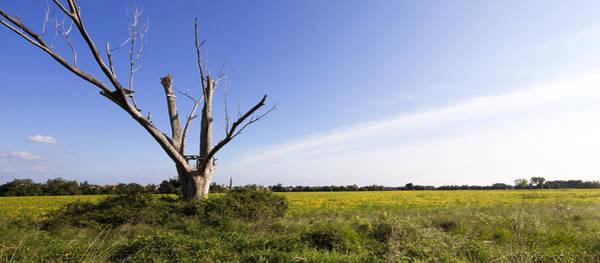 Photograph - Solitary Tree by Helga Novelli