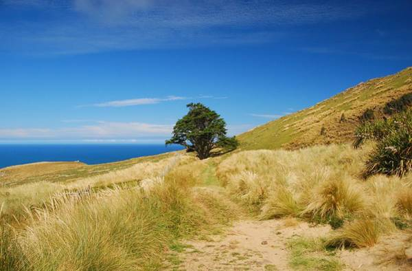 Photograph - Solitary Tree On The Otago Peninsula by Cascade Colors