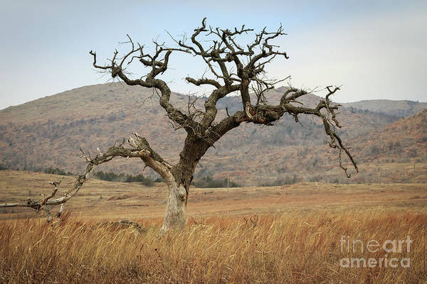 Photograph - Solitary Tree On The Prairie by Richard Smith