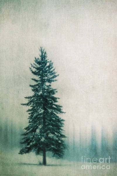 Evergreens Photograph - Solitary Tree by Priska Wettstein