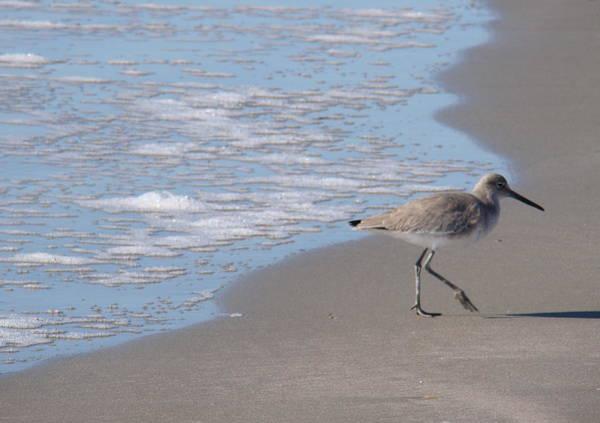 Kiawah Island Photograph - Solitary Willet by Rosanne Jordan
