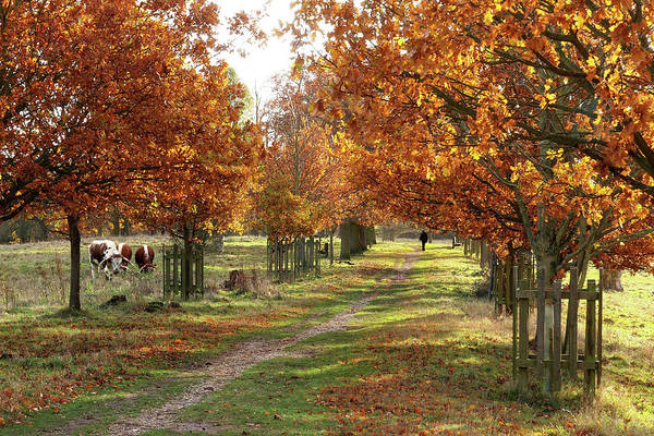 Photograph - Solitude - Autumn In Pishiobury Park by Gill Billington
