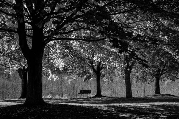 Photograph - Solitude Bench Black And White by Terry DeLuco