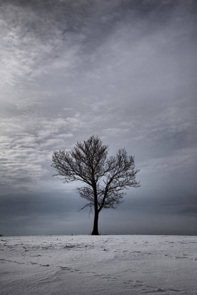 Photograph - Solitude by CA  Johnson