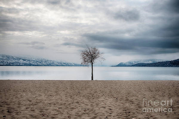 Photograph - Solitude by David Emond