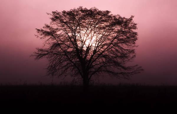 Photograph - Solitude by Jonas Wingfield