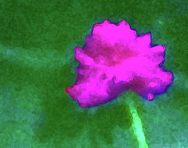 Solo Flower Art Print