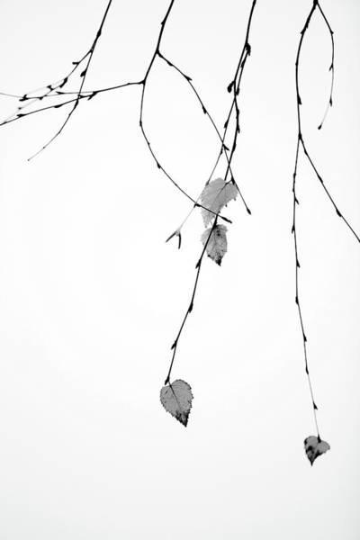 Wall Art - Photograph - Solo by Rebecca Cozart