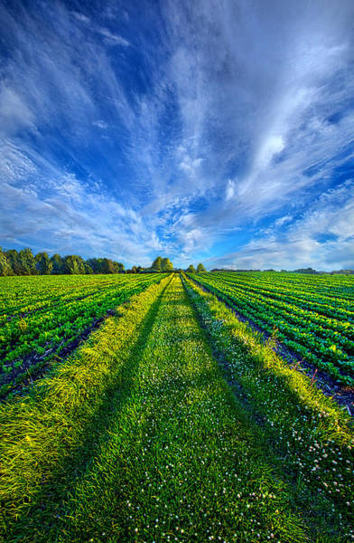 Photograph - Some Days The Way Is Clear by Phil Koch
