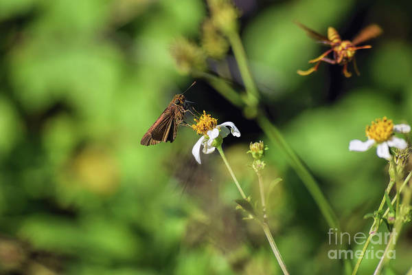 European Hornet Photograph - Some Kind Of Skipper by William Tasker