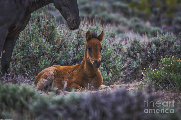 Mare And Foal Photograph - Someone To Watch Over Me by Mitch Shindelbower
