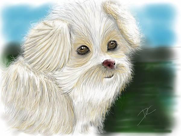 Digital Art - Someone's Pet by Darren Cannell