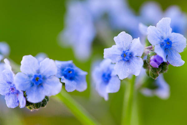 Photograph - Something Blue by SR Green