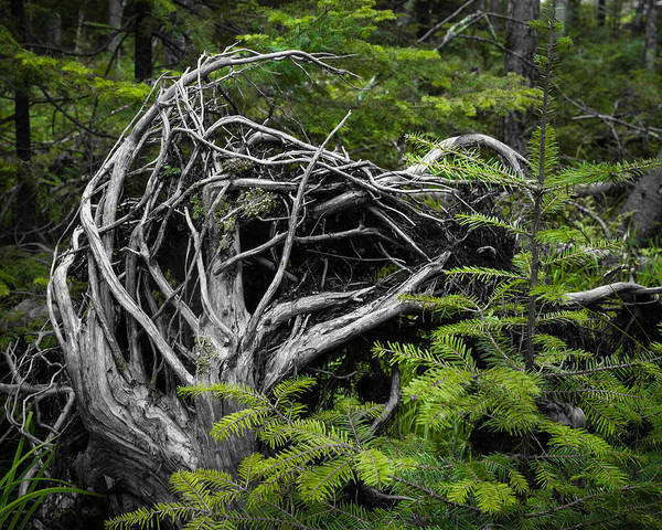 Wall Art - Photograph - Something Wicked In The Woods by Bill Pevlor