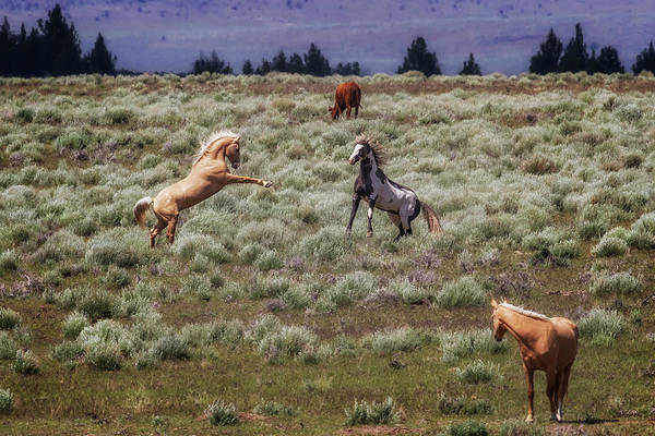 Photograph - Something's Going On by Belinda Greb