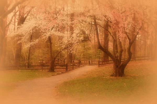 Photograph - Sometimes - Holmdel Park by Angie Tirado